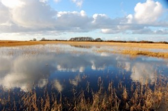 polder-in-friesland