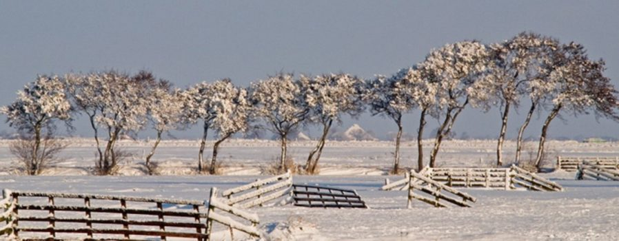 winter-polder-header